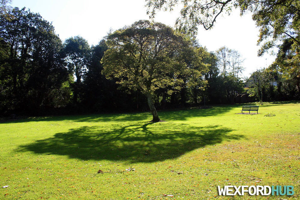 Redmond Park Tree