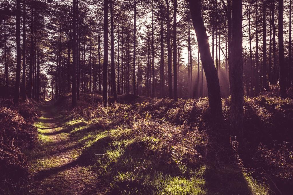 Curracloe Forest